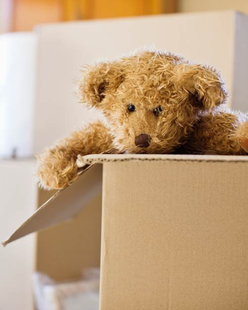 Close up of a teddy bear in a moving box