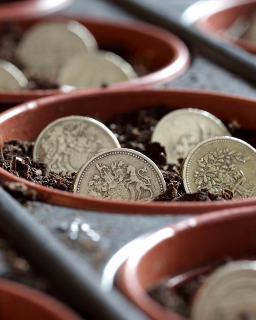 Pound coins in a plant pot