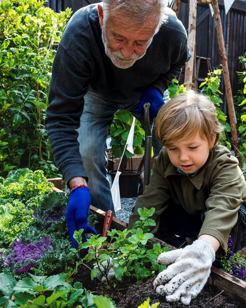 Old man with child gardening